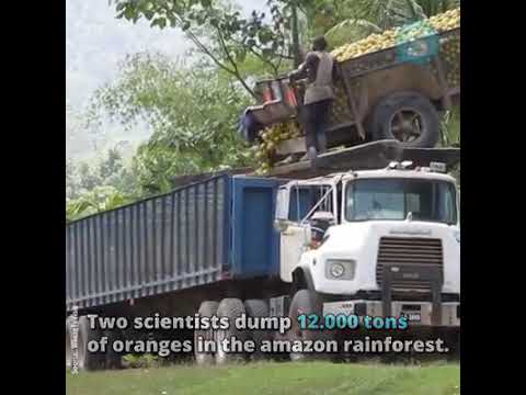 Two scientists dumped 12000 tons of oranges in the Amazon rainforest