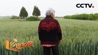 《乡理乡亲》 20200607 一块承包地难坏了老妈妈|CCTV农业