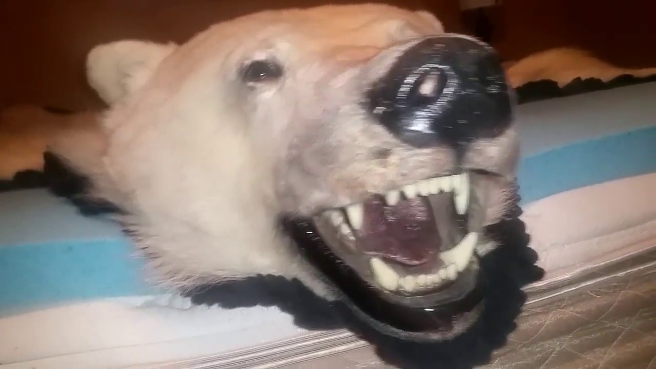 welcome rug threads make bear polar to offer taxidermy vintage the