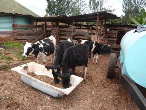 Juhudi Kilimo - Changing The Way Farmers Do Business