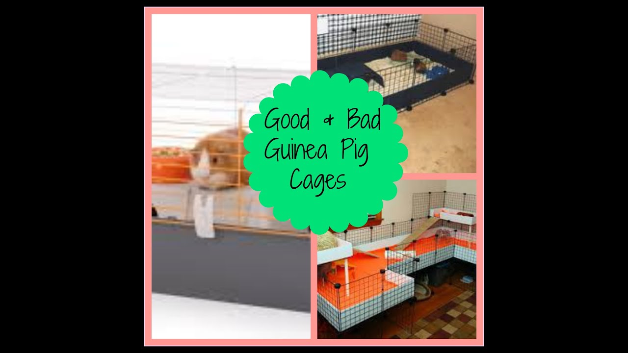 Good and bad guinea pig cages youtube for Where to get c c cages