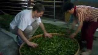 吉姆姑姑家製茶 (JSR helps Candace's Uncle's Tea Farm dry newly picked tea leaves)
