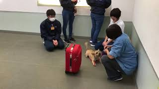 動物専門学校 トリマー 動物看護師 アクアリウム 動物のお仕事 GCT練習②(刺激に慣らす) thumbnail