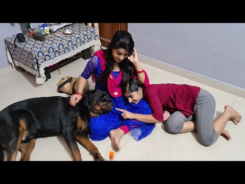 my dog jerry is taking care of my  wife|funny dog videos|rottweiler dog.