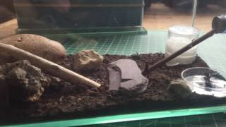 Mako's Lasius niger colony 1. Film 50. June 2016.(, 2016-06-04T15:54:05.000Z)