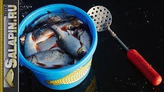 Экшн рыбалка, необычно ранний первый октябрьский лед. Окунь, плотва. [salapinru].