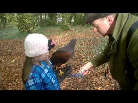 Ireland Vacation Activities: Hawk Walk at Mount Falcon, County Mayo