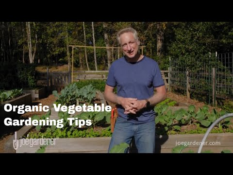 Tips For Successful Organic Vegetable Gardening