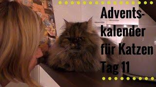 Adventskalender für Katzen Tag 11