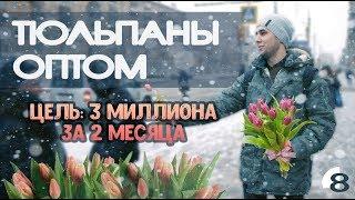 Продажа тюльпанов оптом. Цель 3 миллиона рублей. Первый опыт