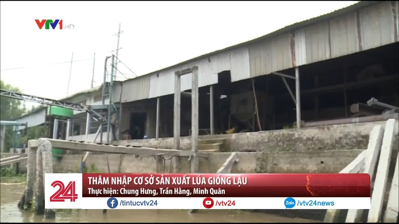 Cơ sở sản xuất lúa giống lậu mỗi năm xuất bán 5.000 tấn  – Tin Tức VTV24
