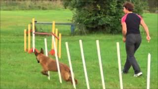 Что могут бельгийские овчарки? - 2(, 2011-08-27T14:00:40.000Z)