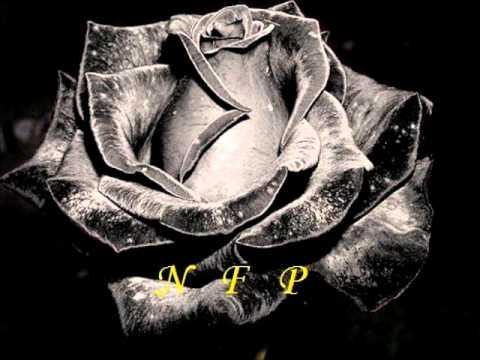 Μαύρο Τριαντάφυλλο - Πυθαγόρας