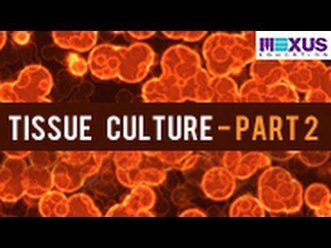 plant tissue culture techniques pdf