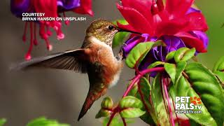 Facts about the amazing little hummingbird