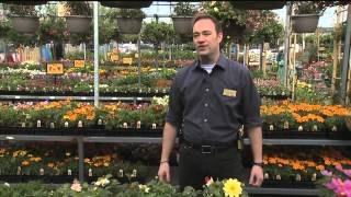 Gardening with Tim: Beginning with Plant Starts