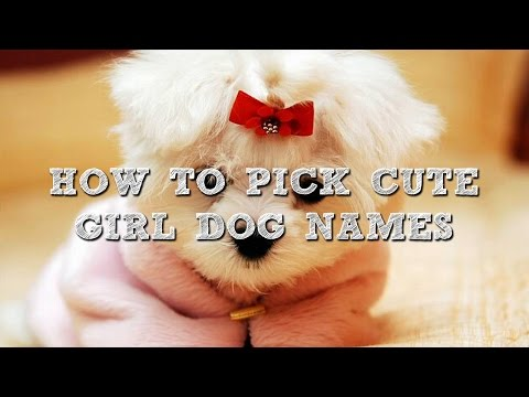 How To Pick Cute Girl Dog Names