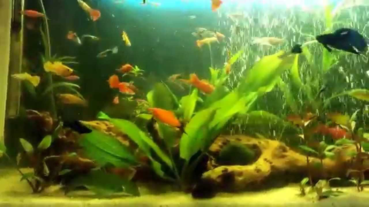aquarium of 100 liters by dalibor karanfilovic youtube. Black Bedroom Furniture Sets. Home Design Ideas