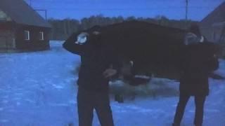Между нами тает лед - Оригинал