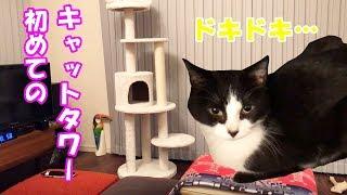 【猫】初めてのキャットタワー!ビビリなおむすびさんの反応は? thumbnail