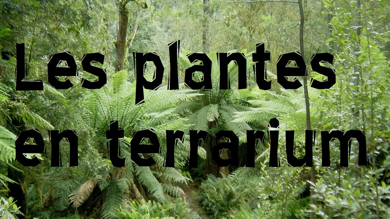 Les plantes en terrarium youtube for Les plantes