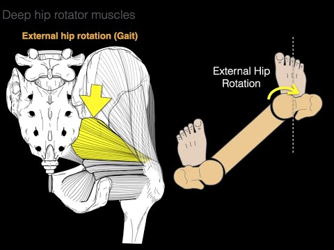 Deep hip rotator
