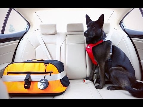 Ancol Dog Car Safety Harness Doovi