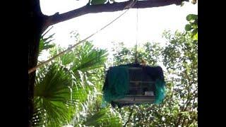 Birds Nests | Nature Documentary | Amazing Animal Homes (Earth Documentaries)