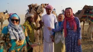 Верблюды арабских шейхов, скачки