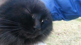 近づくと頭ナデナデを要求してくる猫が超可愛い!喉を撫でるとゴロゴロ...