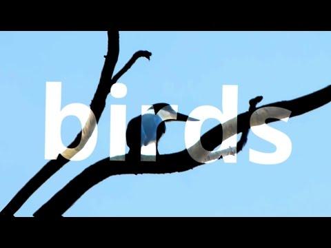 birds 2 - kingfishers (2)