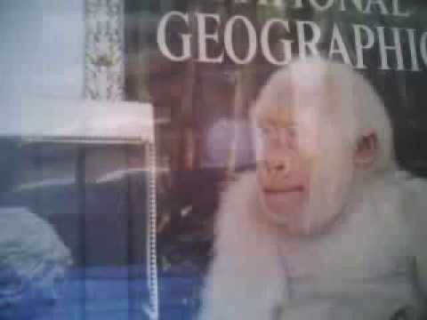 SNOW FLAKE - the only WHITE GORILLA in HIP HOP GALOPOGUS