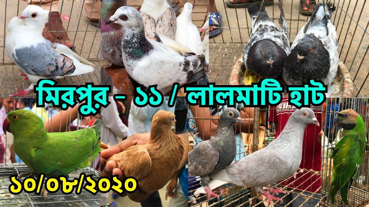 মিরপুর - ১১ লালমাটি হাটে পাখি ও কবুতরের দাম জানুন    কালসি হাট    Mirpur - 11 Lalmati Haat (V - 127)
