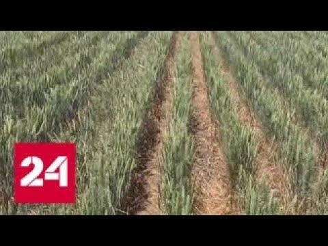 Крым страдает от засухи, а Киев радуется - Россия 24