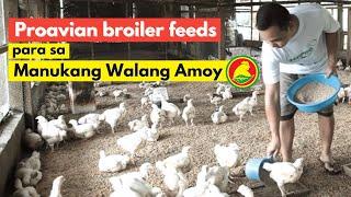 proavian feeds para sa manukang walang amoy at iwas langaw