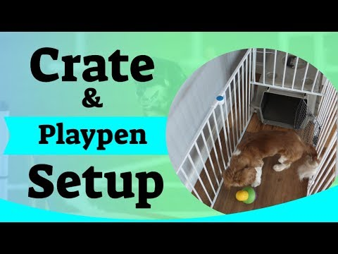 Puppy Crate Setup - Using A Puppy Playpen