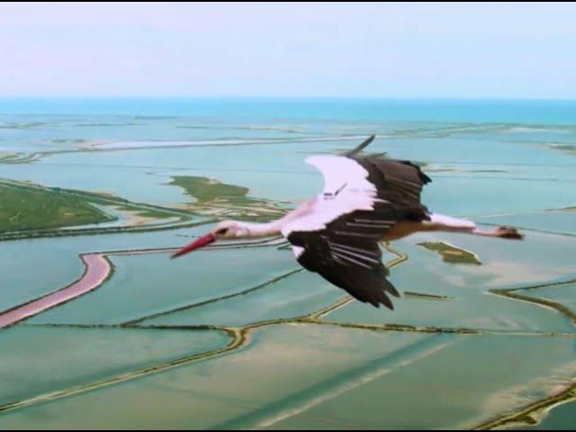 ARTE - Zugvogel Storch