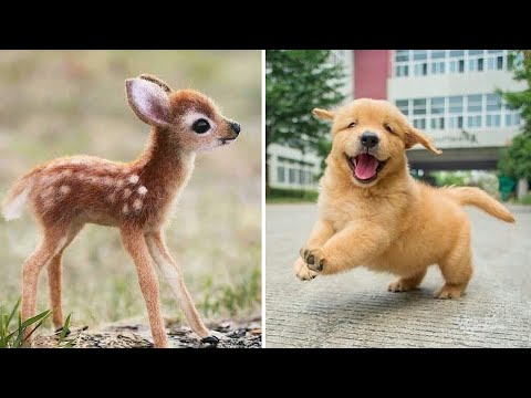 Baby Animals 🔴 Funny Cats and Dogs Videos Compilation (2020) Perros y Gatos Recopilación #17