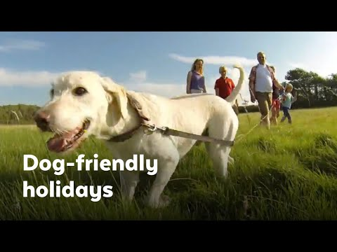 Dog Friendly Holidays in the UK!