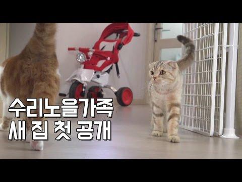수리노을 고양이가족에게 이사 온 새 집 첫 공개!![SURI&NOEL]