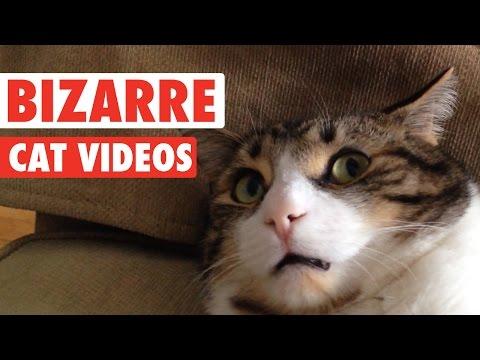 Most Bizarre Cats Compilation 2016