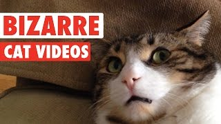Download Most Bizarre Cats Compilation 2016 Mp3 and Videos
