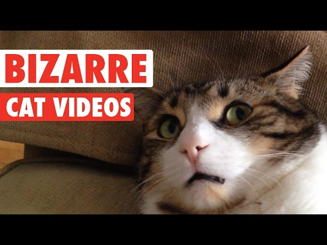 Most Bizarre Cats Compilation 2016