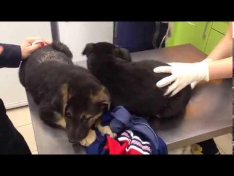 Спасены еще 2 щенка. Нужна финансовая помощь в устройстве на передержку.