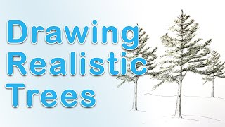 Art Fundamentals - Drawing A Pine Tree In Realistic Style