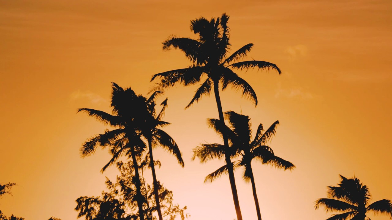 Palm trees sunset no sound screensaver youtube - Free palm tree screensavers ...