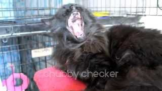 MEOW Back in Black - Adopt a friend with nine lives and cat