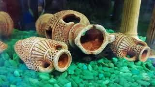 дизайн аквариума 6 часть (искусственные декорации)