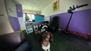 1000 Subscribers Vlog/English Springer Spaniel Dog Walk + After My #Kaabo Escooter CRASH !!