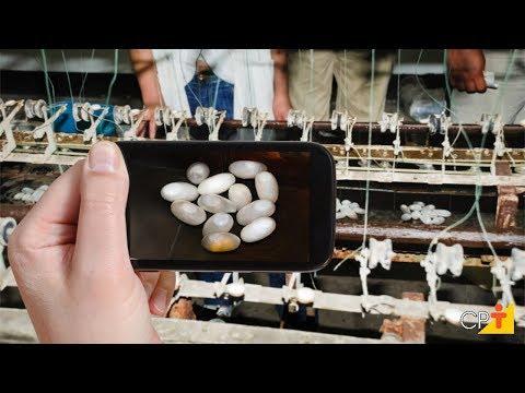 Curso Criação do Bicho-da-Seda - Instalações e Equipamentos - Cursos CPT